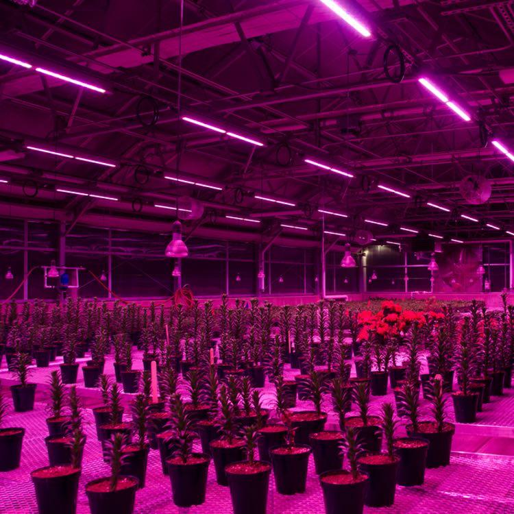 Iluminaci n led para cultivo interior una poderosa herramienta - Cultivo interior led ...