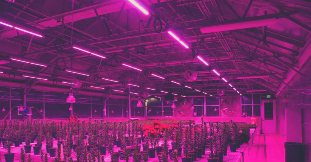 Iluminaci n led para cultivo interior una poderosa herramienta - Led para cultivo interior informacion ...